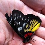 Butterfly Heaven, good hiking