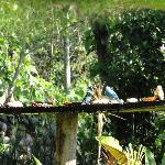 De feeding of the birds