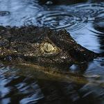 gators of the bay