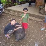 my son with a friendly pig