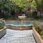 Citrus gardens at Amani