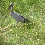 Bird Attractions Bhitarkanika National Park, Orissa, India