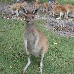 Wildlife park , Perth