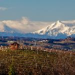 Fall Vineyard in Barbaresco