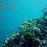 Du trenger ikke dra på båttur for å oppleve flotte rev. Ta taxi til El-Fanar beach og hopp i hav
