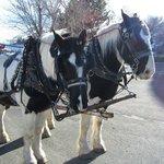 Horses on the wagon ride.