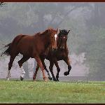 Farm Tours of Ocala Foto