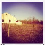 Chilly, Wintry Days at the vineyard