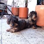 Rogelio y Frida