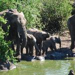 Elephants from the deck
