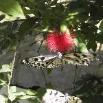 Auf der Schmetterlingsfarm