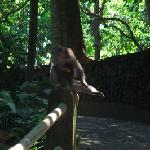In the monkey forest