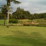 Coconut tree on the 8th green, par 3