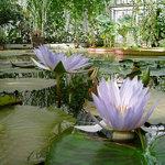 Foto de Bergius Botanic Garden