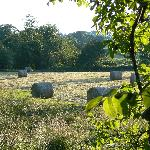 The field on a July evening