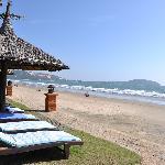 Pandanus beach side