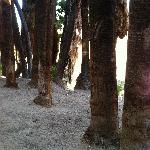 Native palms
