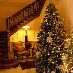 Christmas Trees in the Lobby