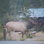 Timber Creek Campground-RMNP