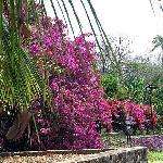 Nogueras - Eco Garden