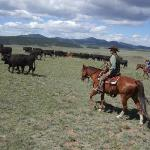 Home, home on the range....