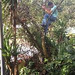 Alonso up a tree!