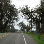 Willamette Valley - a country road