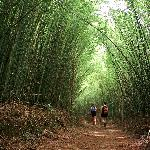 Take a walk through the bamboo with us
