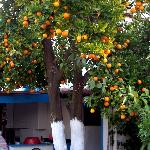 orange tree in the middle of the courtyard