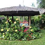 Garden Flowers2