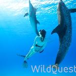 WildQuest Foto