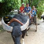 Water Buffalo ride.