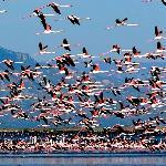 Los flamencos del Parc Natural del Delta de l'Ebre
