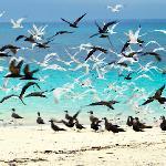 Sandbank Picnic - Dhow Safaris Foto