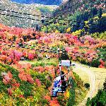 Fall Colors at Sundance Resort