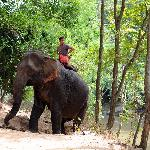 Elephant coming up onto road near river