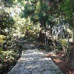 杉並木に囲まれた熊野古道