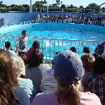 The crowd around the dolphin pool