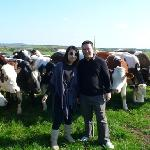 lovely day with lovely cow