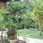 Vista del jardin y uno de los bongalows