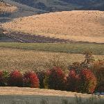 the farm land of Walla Walla
