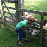 The friendly sheep x