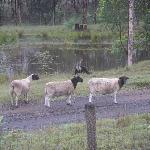 Some neighbour's sheep!