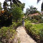 beautiful garden setting