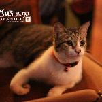 "Jambu house cat ""Gigi"""