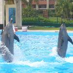 Hoteigene Delfine