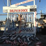 Dolphin Dock Day Trips
