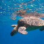 one of many turtles at all the sites