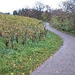 walking/running trail