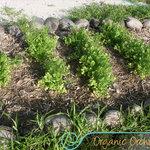jardín orgánico/organic garden